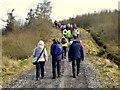 H4940 : Walkers in Jenkin Forest, Mullaghfad by Kenneth  Allen