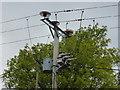 NY7064 : Small pole transformer by Bob Harvey