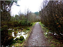 H5776 : Path around Loughmacrory Lough by Kenneth  Allen