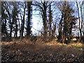 SP7309 : Trees by Aylesbury Road, Haddenham by David Howard