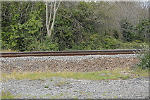 SX4458 : Cornish Main Line by N Chadwick