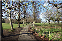 TQ1773 : Path in Marble Hill Park by Des Blenkinsopp
