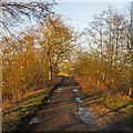 TM4490 : Marsh Lane, Worlingham by Roger Jones