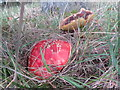 SO1053 : Different fungi by Bill Nicholls