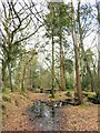 SU2604 : A pool of water in Poundhouse Inclosure by Steve Daniels