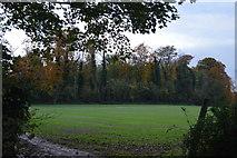 TL5153 : Copley Hill by N Chadwick
