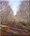 NH3061 : Old road, by Chuilin by Craig Wallace