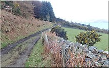 J1812 : Track with public rights of way leading from the Slieve Foye Woods to King John's Castle by Eric Jones