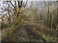 NS3977 : Path at Kilmalid by Lairich Rig