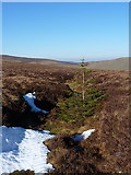 SJ0831 : A lone tree by Richard Law