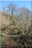 SO6856 : Path through Paradise Wood by Philip Halling