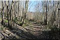 SO6756 : Coppice woodland by Philip Halling