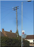 TL6706 : Traditional telegraph pole on Ongar Road, Writtle by David Howard