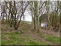 SJ8247 : Public footpath passes through spinney on Gorsty Bank by Jonathan Hutchins