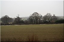 SK1409 : Field, Potter's Thatch by N Chadwick
