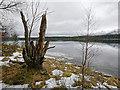 NH9608 : Winter shoreline  of Loch Morlich : Week 11
