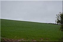 SY0087 : Field by Woodbury Rd by N Chadwick