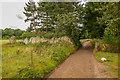 SZ5692 : Quarr Road by Ian Capper