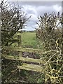 SJ7848 : Stile into field near Pheasant Hall by Jonathan Hutchins