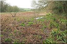 SW9873 : Marshy ground, Trevilling by Derek Harper