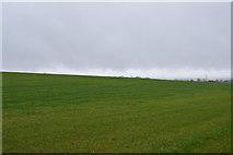 SY0088 : Big field by N Chadwick