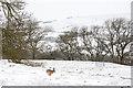 NZ0636 : Brown hare in flight by Trevor Littlewood