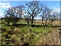 H5270 : Trees and bog, Deroran by Kenneth  Allen