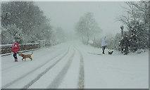SX9065 : Dog-walking, Cricketfield Road, Torre by Derek Harper