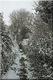 SX9065 : Snowy footpath to Chapel Hill by Derek Harper