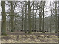 SP9732 : The deer park, with deer in the mid-distance by Rob Purvis