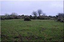 SX4975 : Rough pasture by N Chadwick