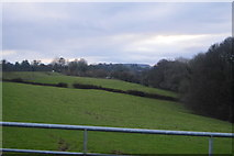 SX4975 : Pasture, the Tavy Valley by N Chadwick