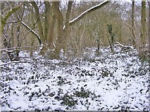 SO9194 : Snowy Wood by Gordon Griffiths