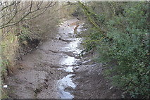 SX9788 : Creek to River Clyst by N Chadwick