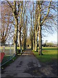 SP3509 : Tree-lined public footpath, The Leys, Witney, Oxon by P L Chadwick