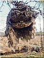 NH7036 : Wasps' Nest by valenta