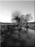 TQ2173 : Pollard willows by Beverley Brook, March 2018 by Stefan Czapski