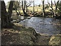 NZ1645 : The Browney Ford and Stepping Stones by John Walton