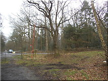 TL9195 : Woods by Peddars Way, Pockthorpe by David Howard