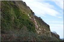 SX9266 : Cliff, Roundhouse Point by N Chadwick