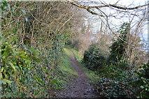 SX9266 : Footpath above Shag Cliff by N Chadwick