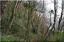 SX9267 : Steep wooded slope by N Chadwick