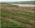 SW9674 : Arable farmland above the Camel estuary by Derek Harper