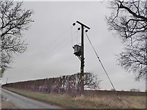 TL9891 : Electricity pole on Church Road, Shropham by David Howard