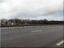 TL5759 : The A11, Newmarket Bypass by David Howard
