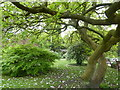 SJ8490 : Trees at Parsonage Gardens by Eirian Evans