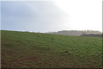 SX8957 : Grasslands by N Chadwick