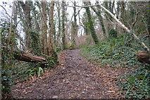 SX9056 : South West Coast Path, Marridge Wood by N Chadwick