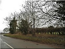 TL9789 : Watton Road, Larling by David Howard