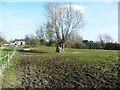 TL2138 : Pollarded tree, Astwick by Humphrey Bolton